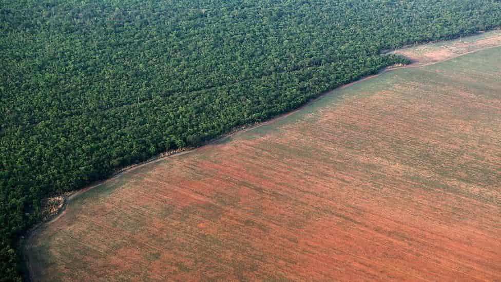 agronegocio-desmatamento